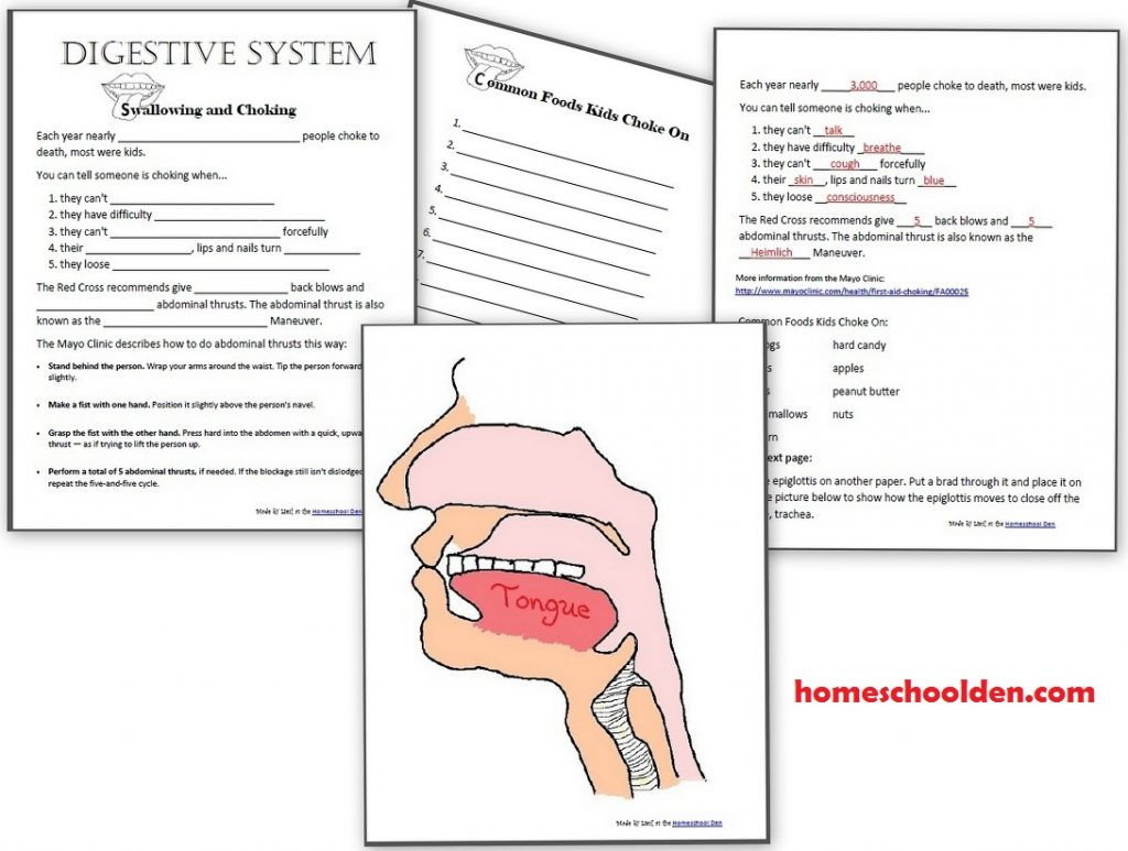 Digestive System Worksheets Middle School Digestive System Worksheets 100 Page Packet Homeschool