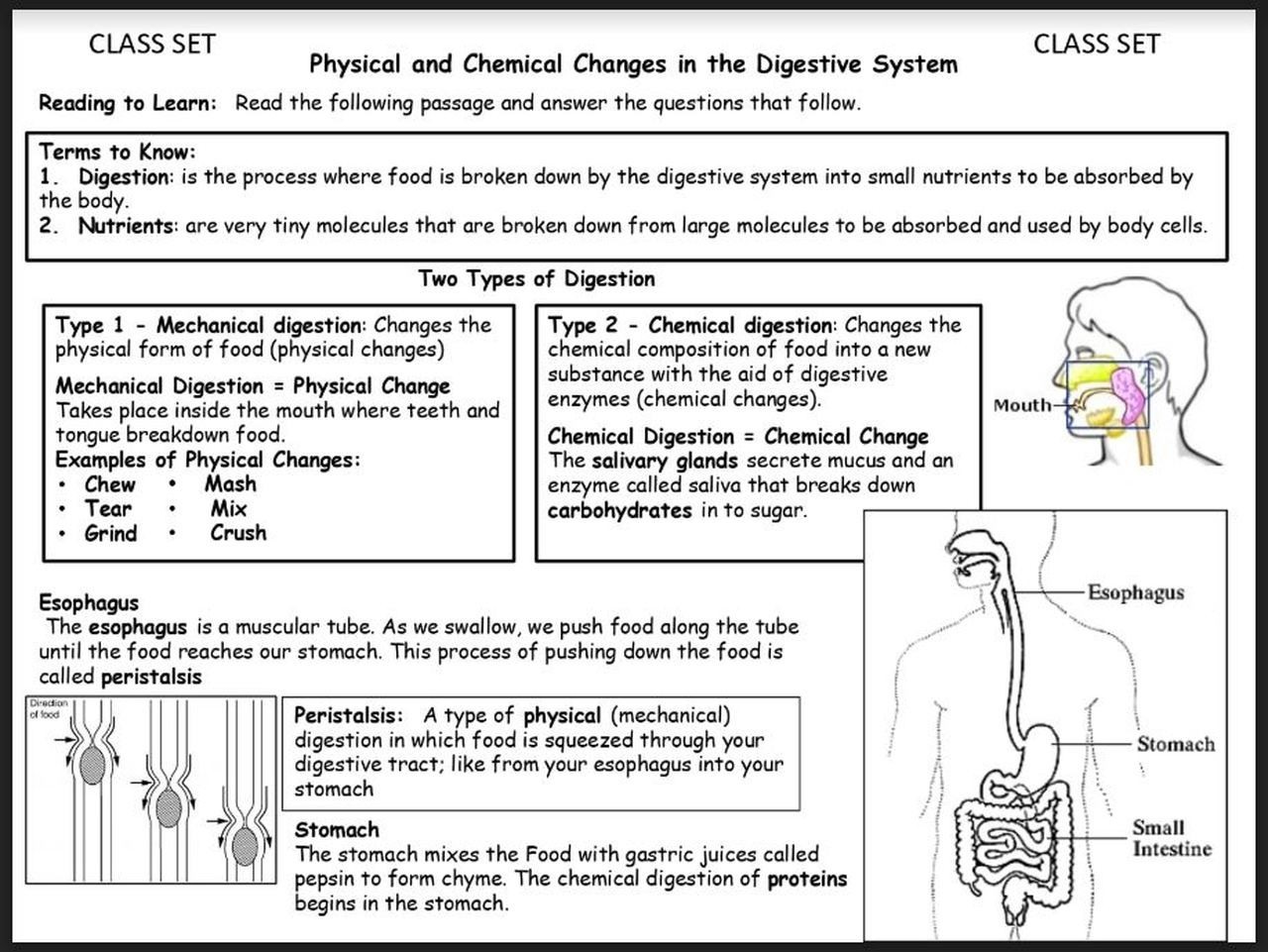 Digestive System Worksheets Middle School Physical and Chemical Changes In the Digestive System