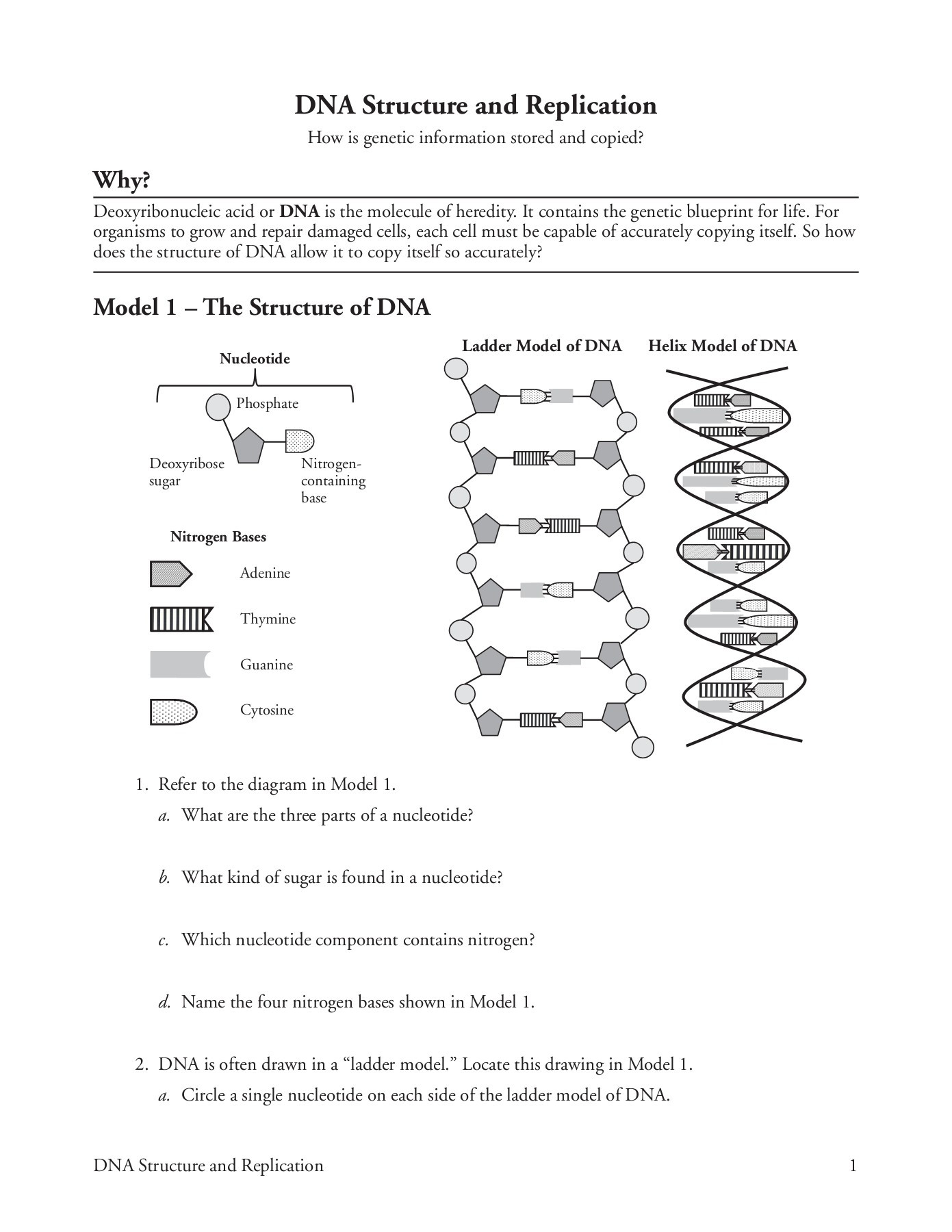 Dna Structure Worksheet High School Dna Structure and Replication Pages 1 5 Text Version