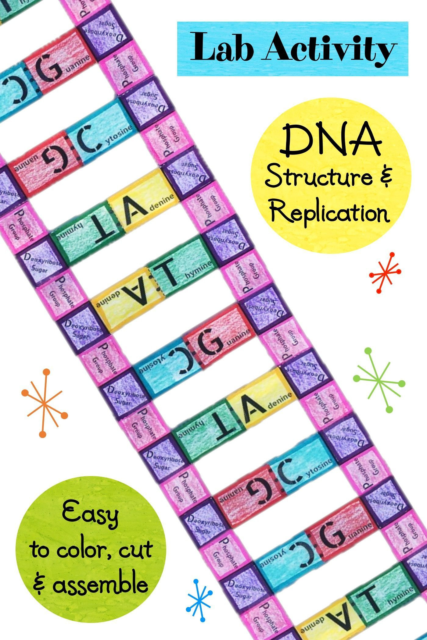 Dna Structure Worksheet High School Lab Activity Dna Structure and Replication