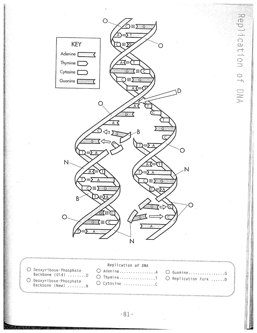 Dna Structure Worksheet High School the Dna Worksheet Dna Review Worksheet Pichaglobal Rna