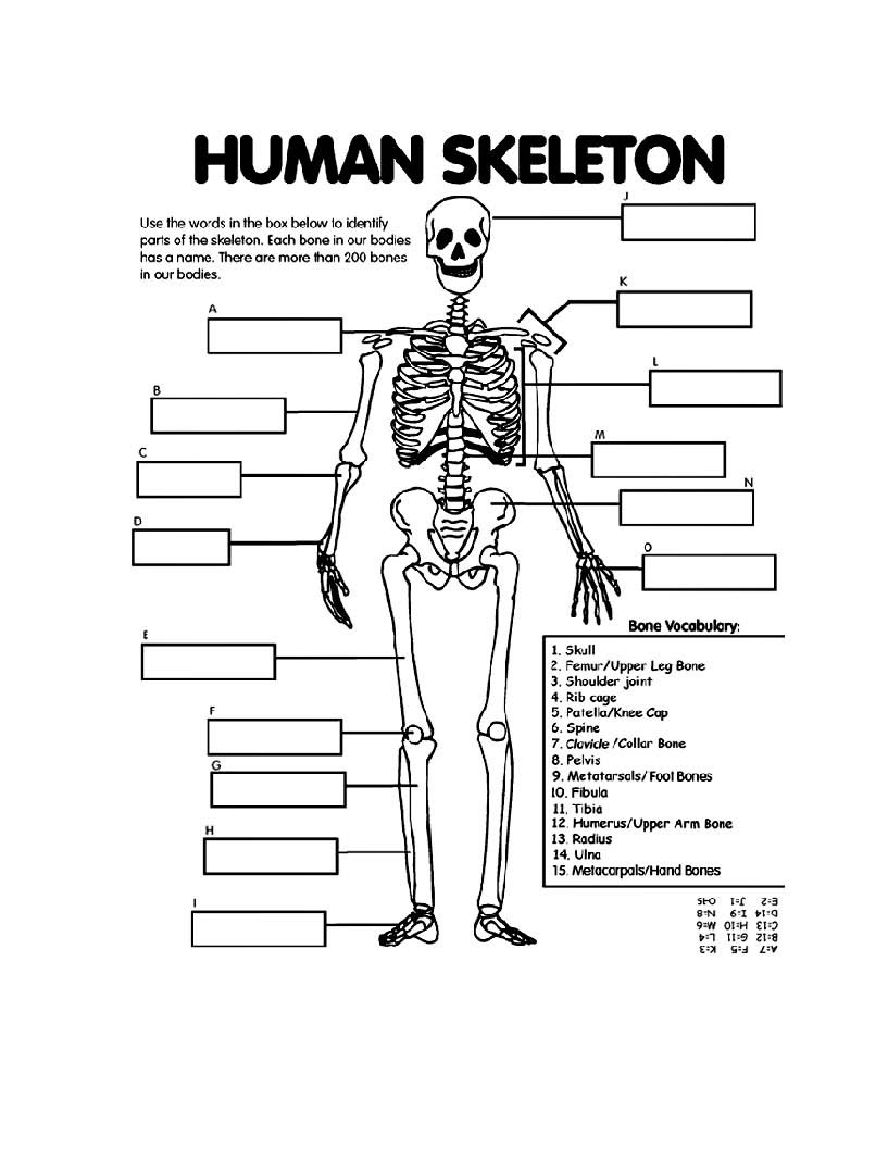 Free Printable Anatomy Worksheets Coloring Book Extraordinary Free Printable Anatomy