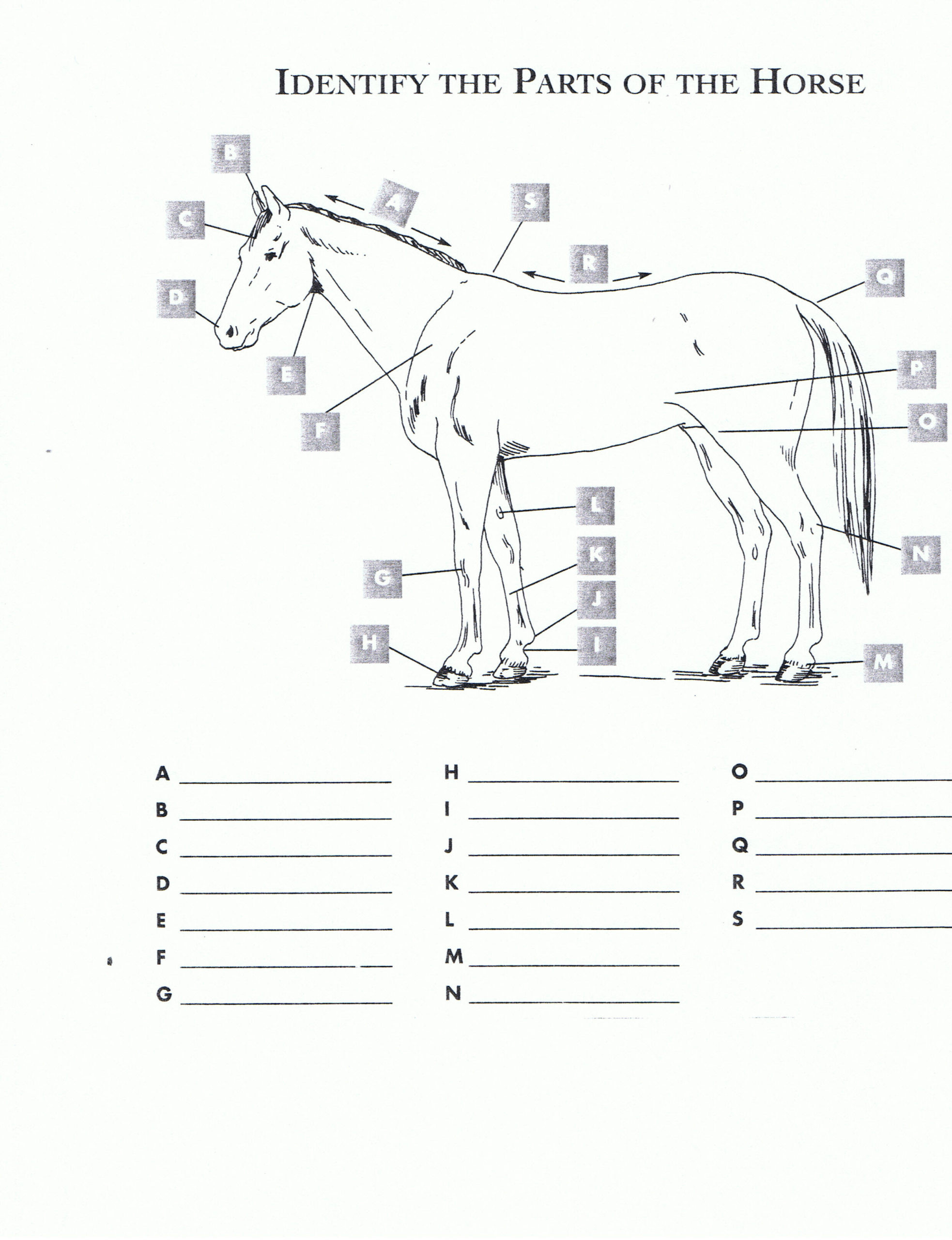 Free Printable Anatomy Worksheets Free Misty Chincoteague Worksheets Printable and Stuart