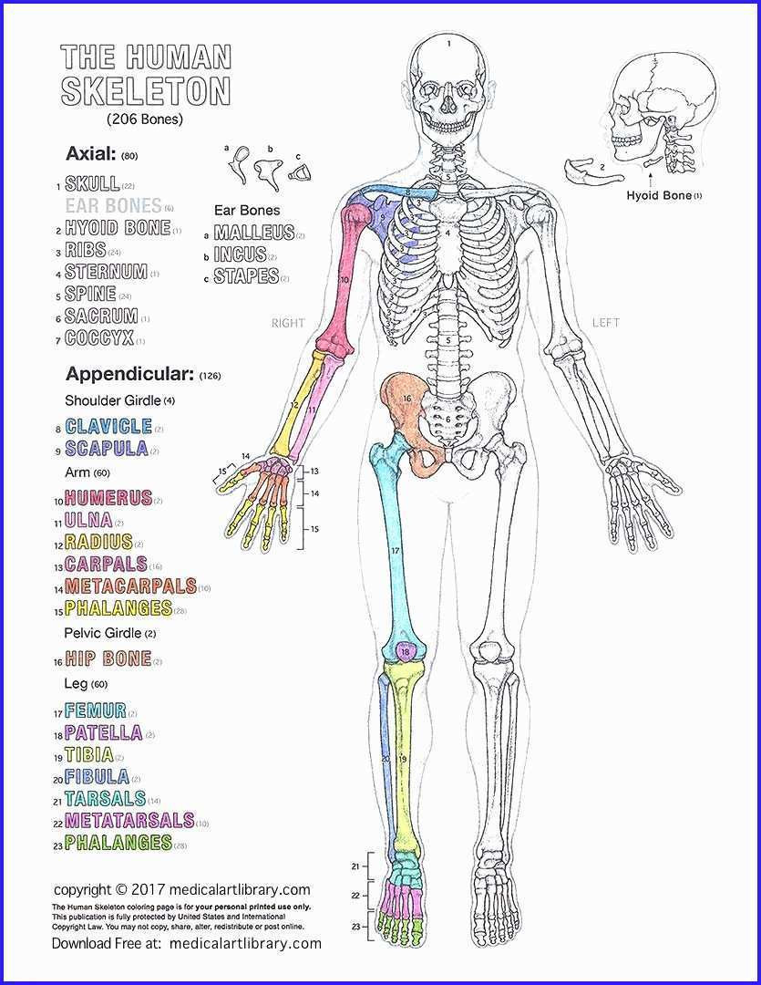 Free Printable Anatomy Worksheets Free Printable Anatomy Coloring Pages Picture Inspirations