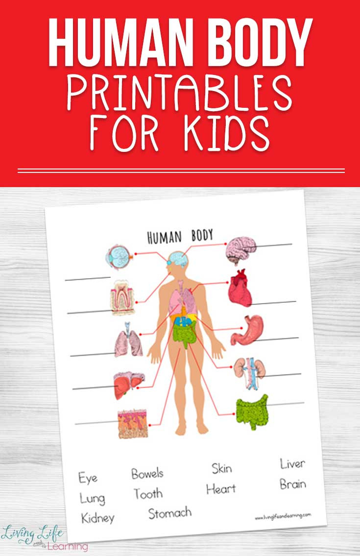 Free Printable Anatomy Worksheets Human Body Printables for Kids
