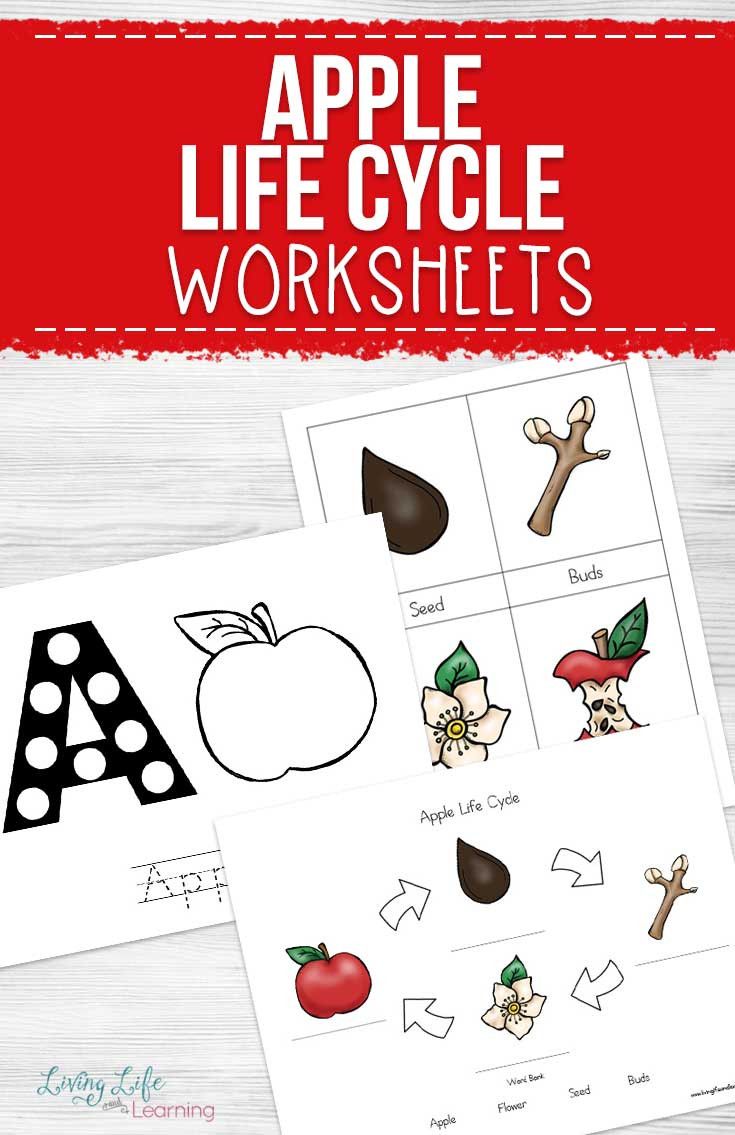 Free Printable Apple Worksheets Apple Life Cycle Worksheets