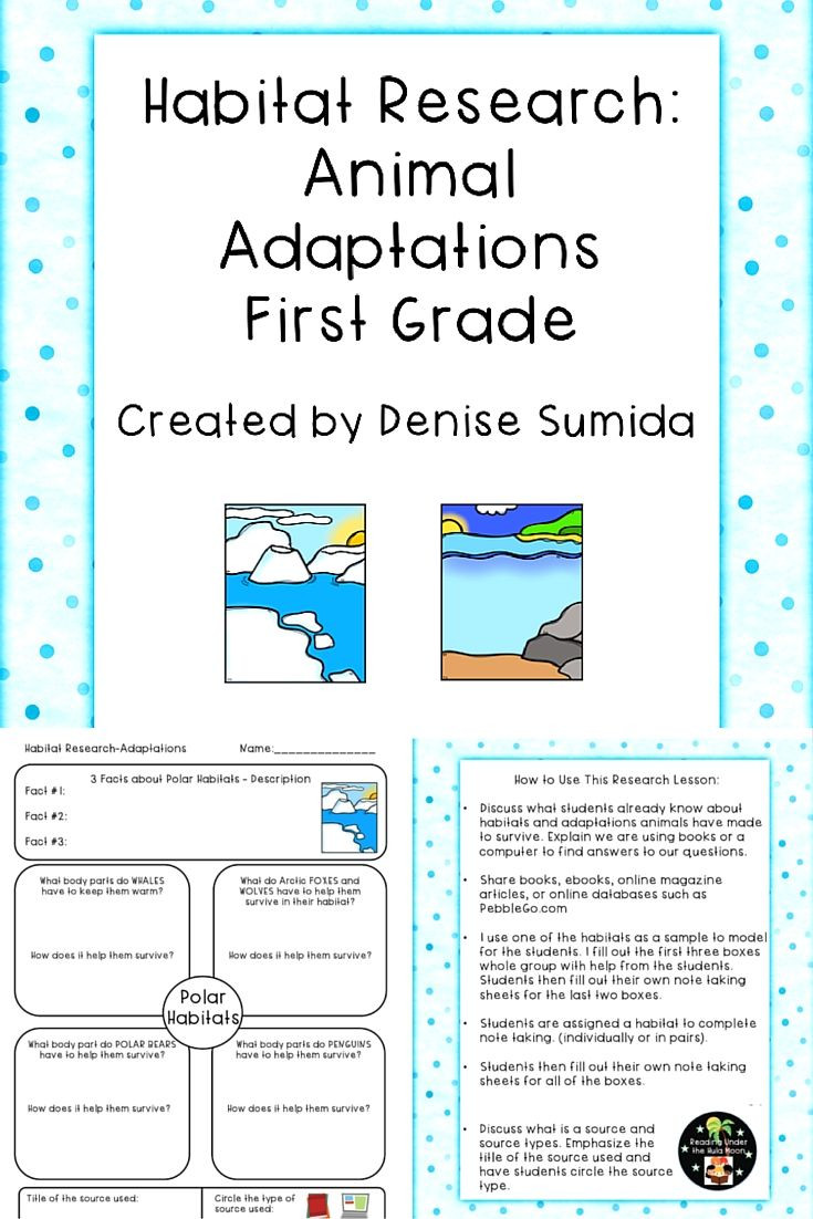 Habitat Worksheets for 1st Grade Habitat Research Animal Adaptations First Grade