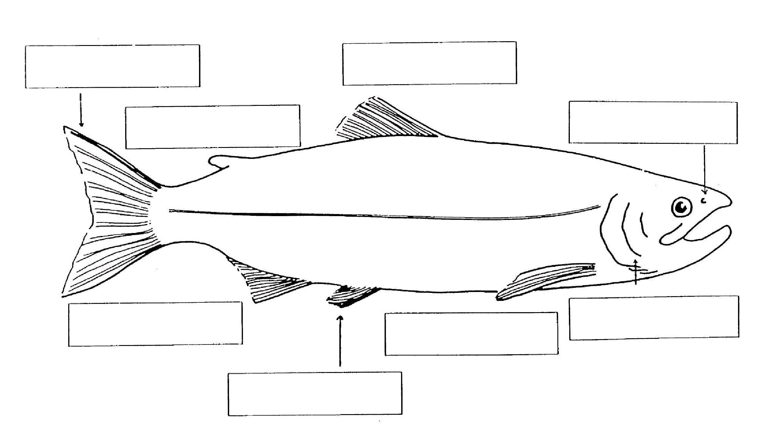 Habitat Worksheets for 1st Grade Types Of Fish and their Habitats Worksheets Google Search