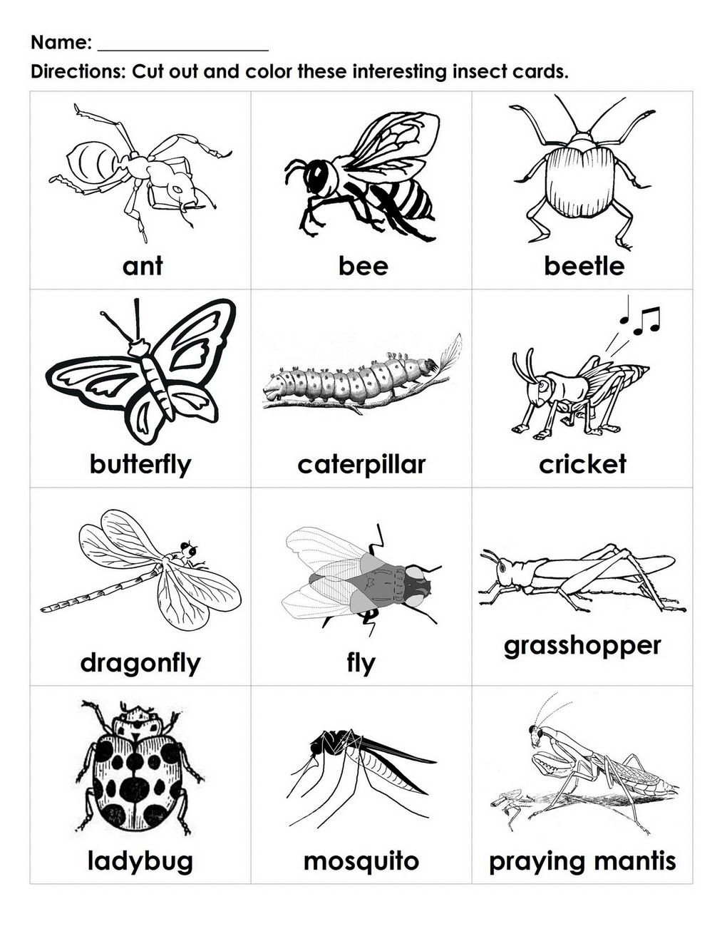 Insect Worksheets for First Grade Bugs for Kids to Color