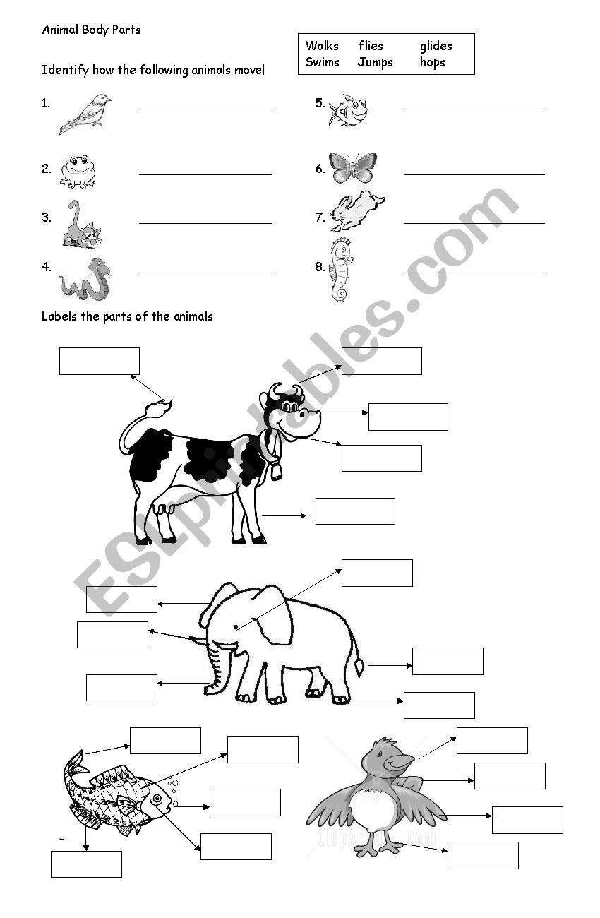 Mammals Worksheets for 2nd Grade Animal Body Parts Esl Worksheet by Ameeyupe Worksheets