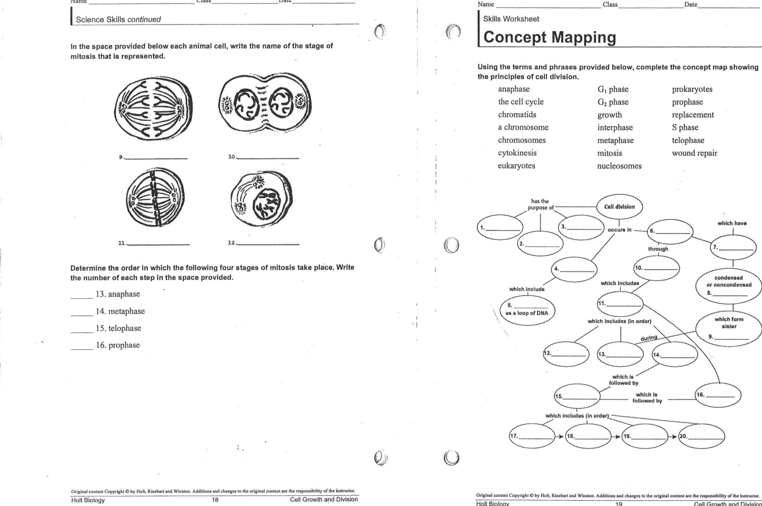 Meiosis Worksheet Middle School Free Worksheets Cell Division