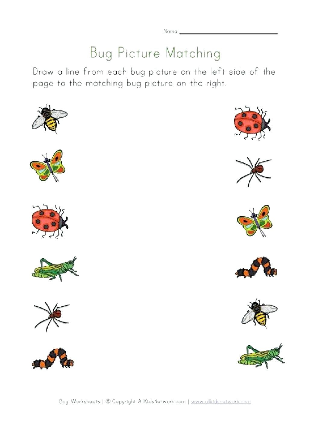 Preschool Bug Worksheets Bugs Worksheets for Preschool Clover Hatunisi