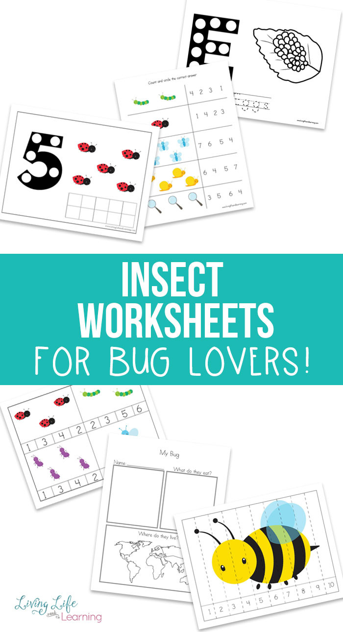 Preschool Bug Worksheets Free Insect Worksheets for Kids