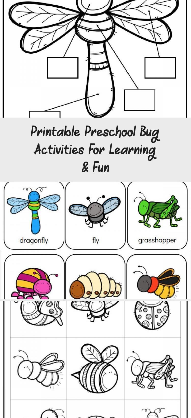 Preschool Bug Worksheets Insect Unit Study