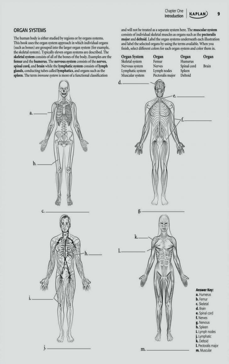 Printable Anatomy Worksheets Coloring Pages Human Anatomy and Physiologyook 728x1157