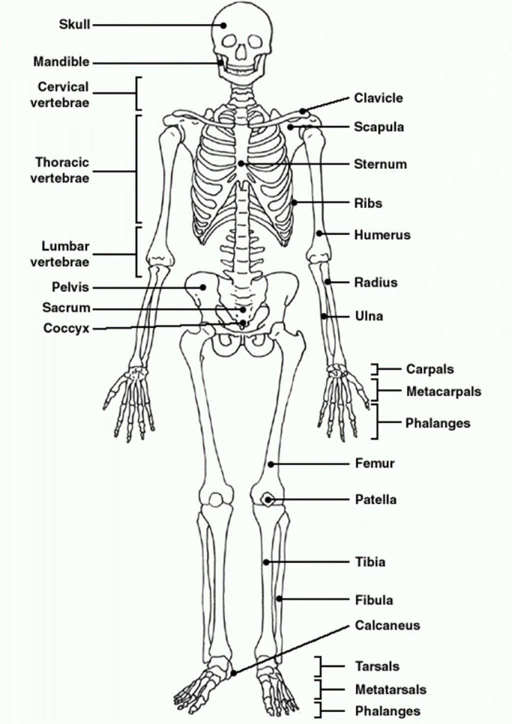 Printable Anatomy Worksheets Pin On Printable Workesheet for Preschoolers