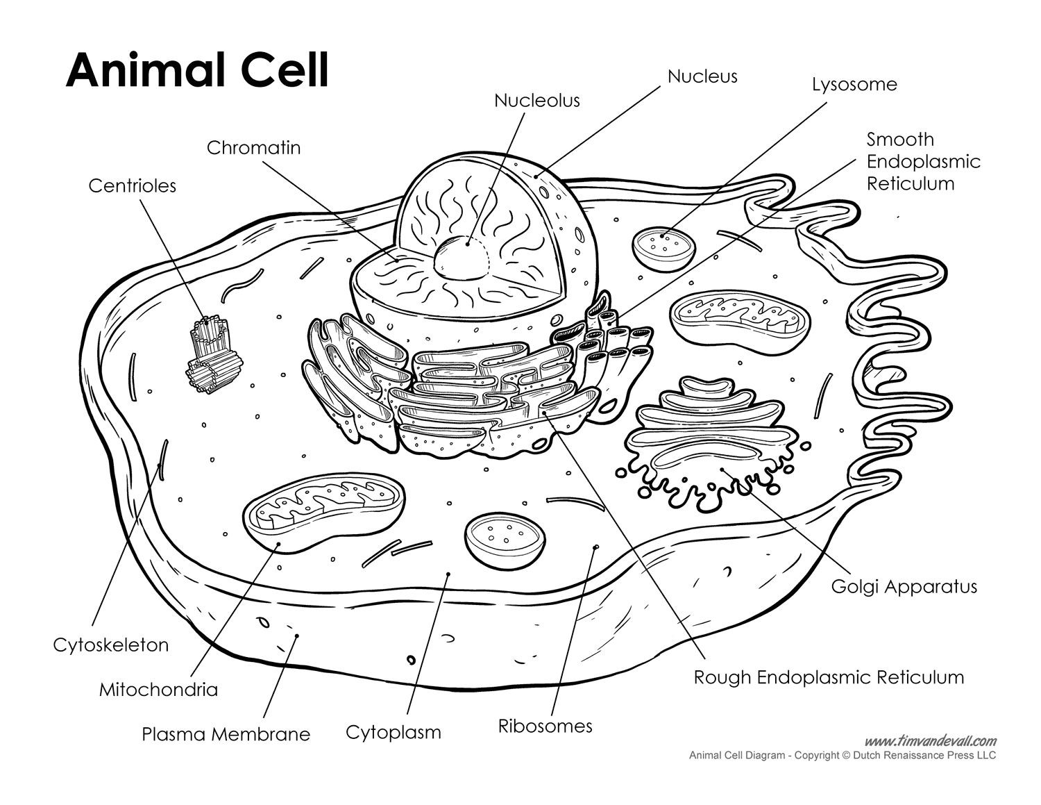 Printable Animal Cell Diagram Animal Cell Sketch Animal Cell Drawing Labeled – Drawing