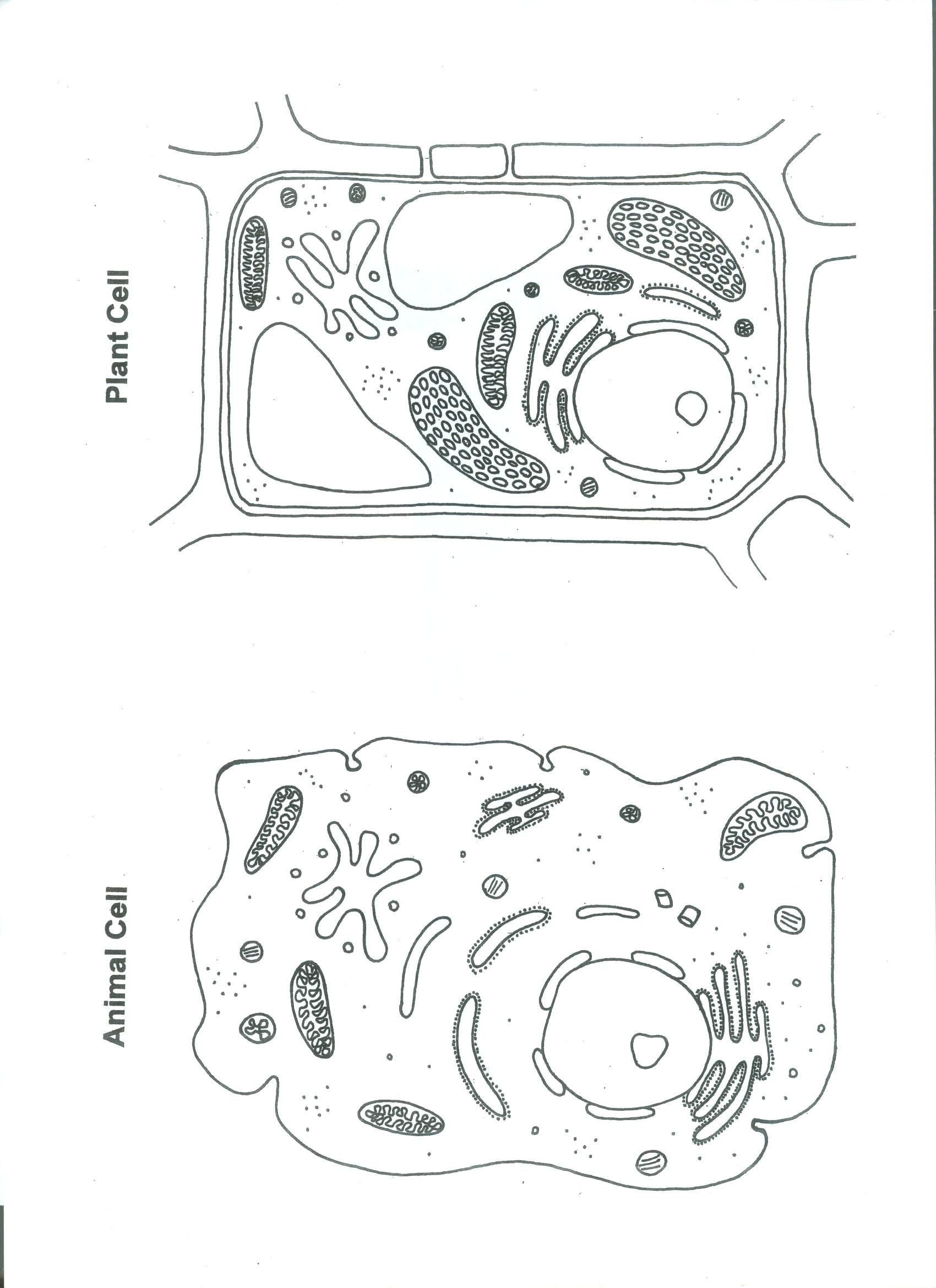 Printable Animal Cell Diagram Unlabeled Animal Cell Worksheet