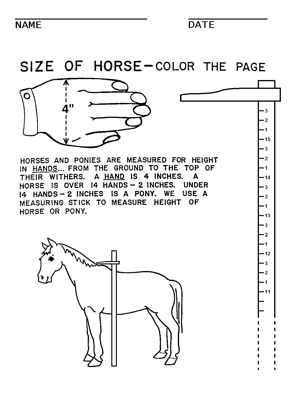 Printable Horse Anatomy Worksheets Horse Camp Worksheets
