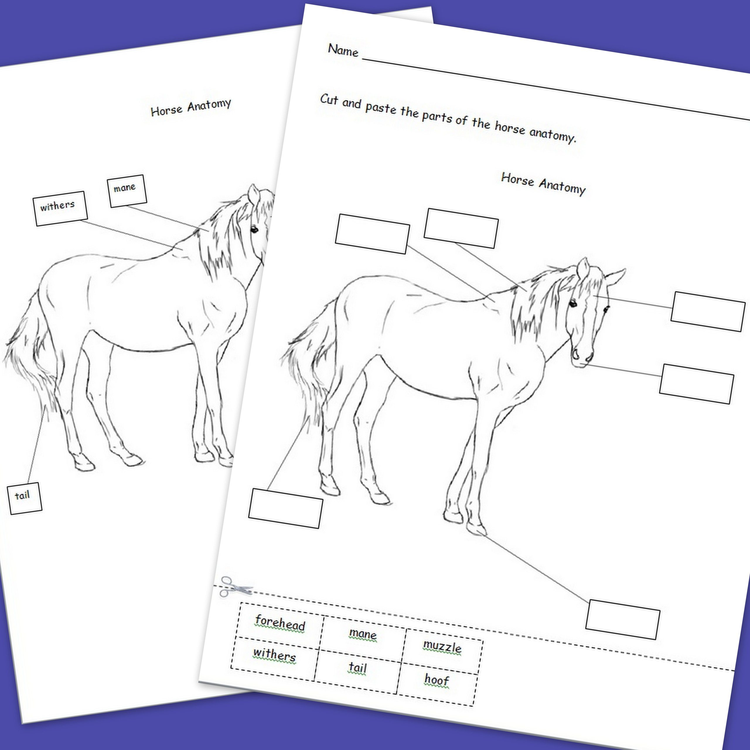 Printable Horse Anatomy Worksheets Horse Freebie