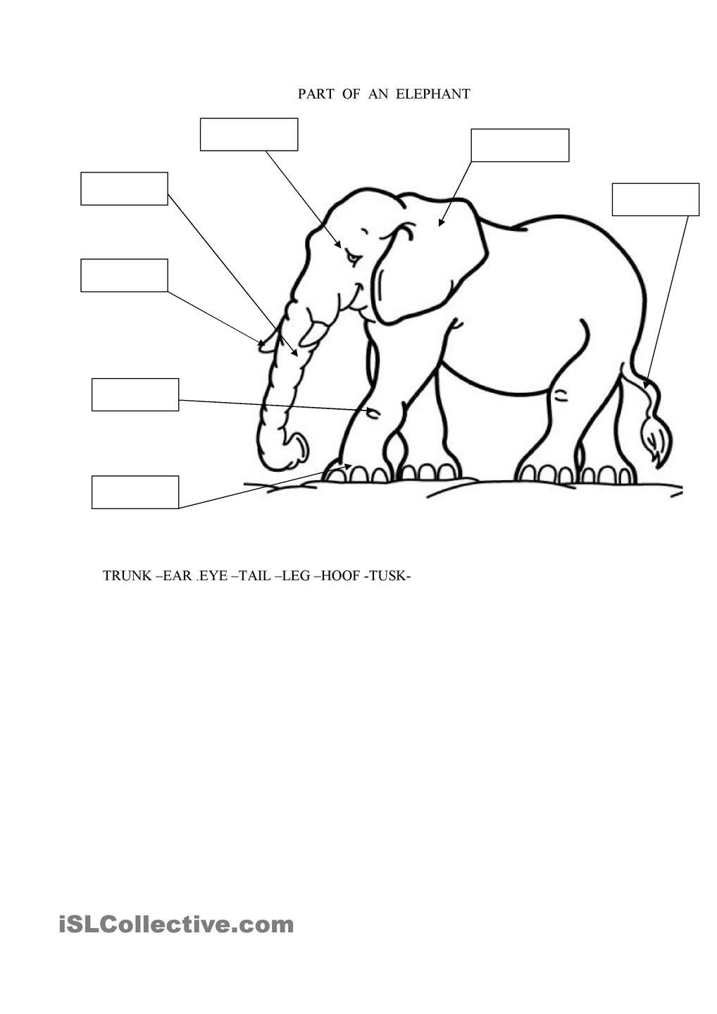 Printable Horse Anatomy Worksheets Parts Of An Elephant