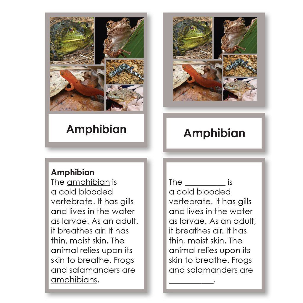 Zoology Worksheets High School Zoology Fish Worksheets