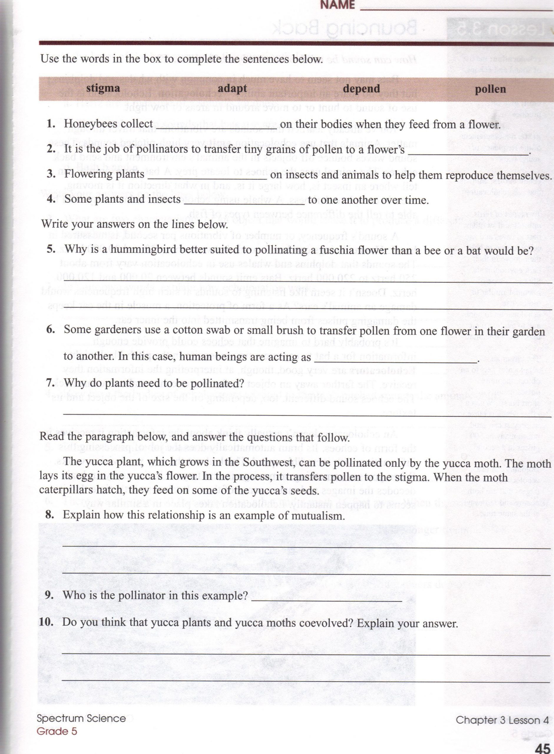 5th Grade Ecosystem Worksheets Biomes at A Glance Worksheet Answers
