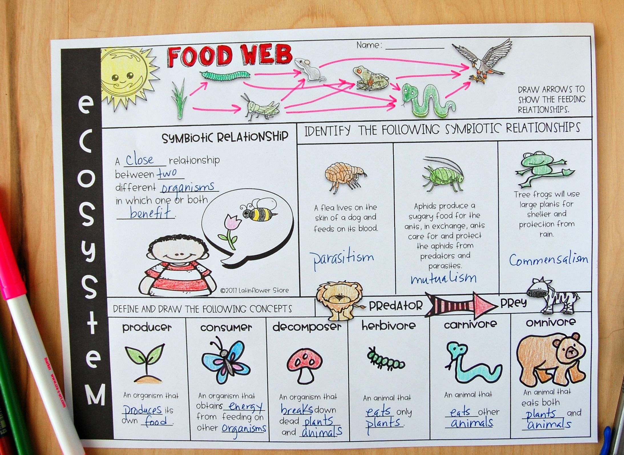 5th Grade Ecosystem Worksheets Ecosystem Review Worksheet