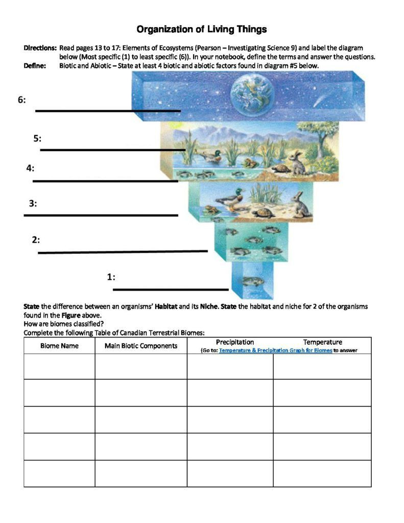 5th Grade Ecosystem Worksheets organization Of Living Things Worksheet
