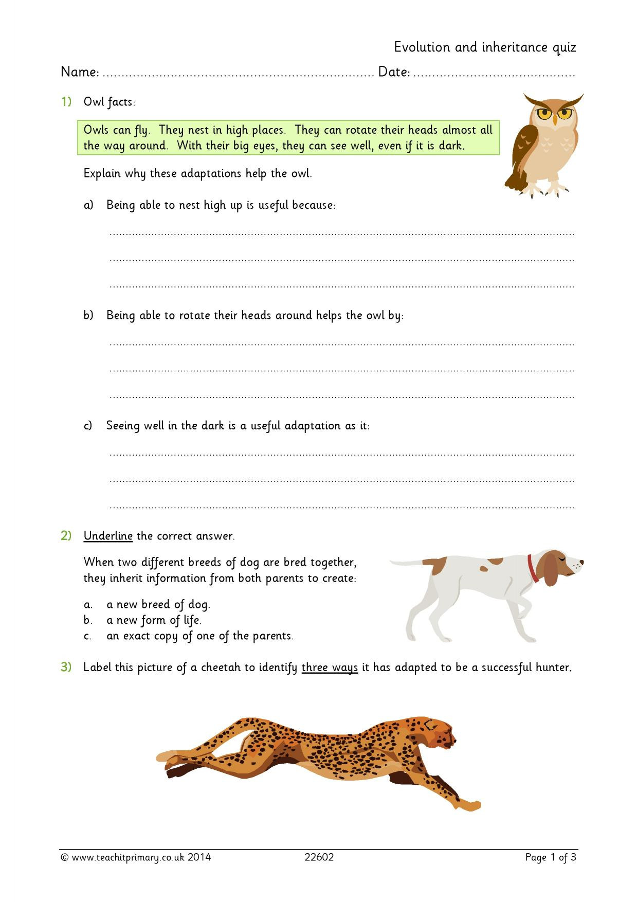 Adaptation Worksheets for Middle School Adaptation Ks2 Worksheet