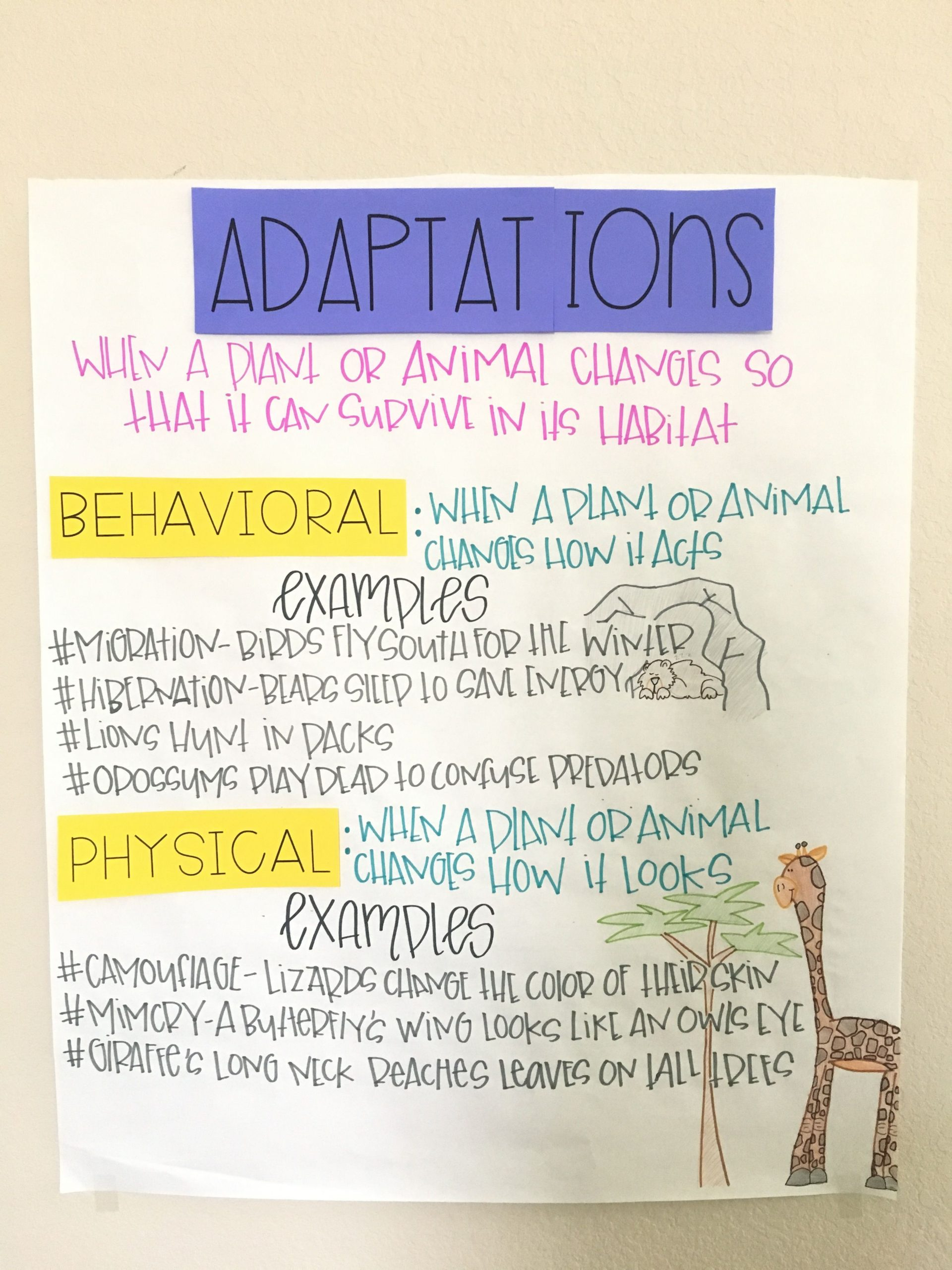 Adaptation Worksheets for Middle School Animal Adaptations Activity and Interactive Notebook