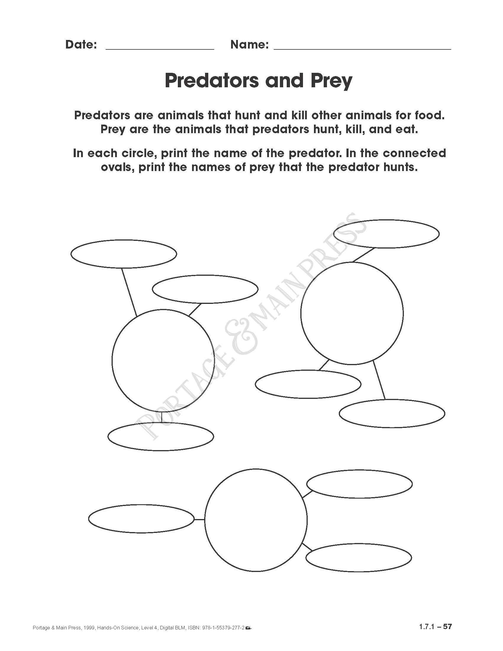 Adaptation Worksheets for Middle School Grade 4 Science Predators and Prey Activity Sheet