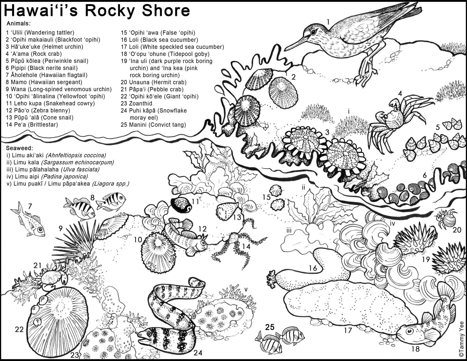 Adaptation Worksheets for Middle School Untitled Adaptation Plants Worksheets Hawaiiintertidal144