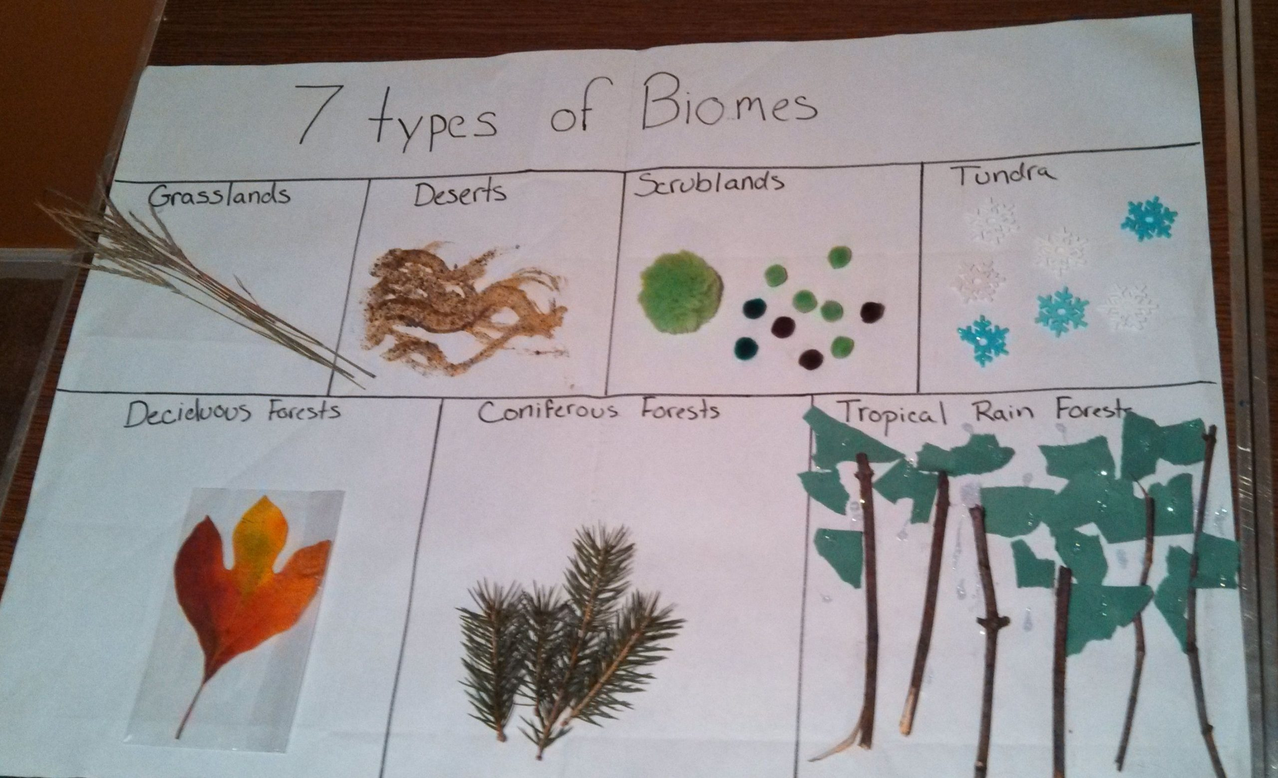 Biomes Worksheet 5th Grade 7 Types Of Biomes Project We Used Anything We Could Find