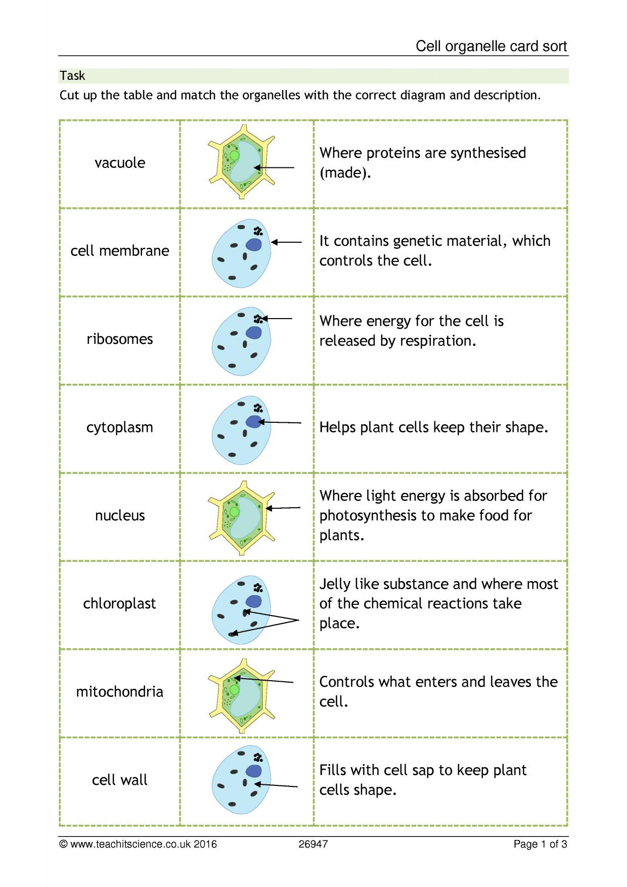 Cell organelles Worksheet Middle School Cellular organelle Function Matching Worksheet