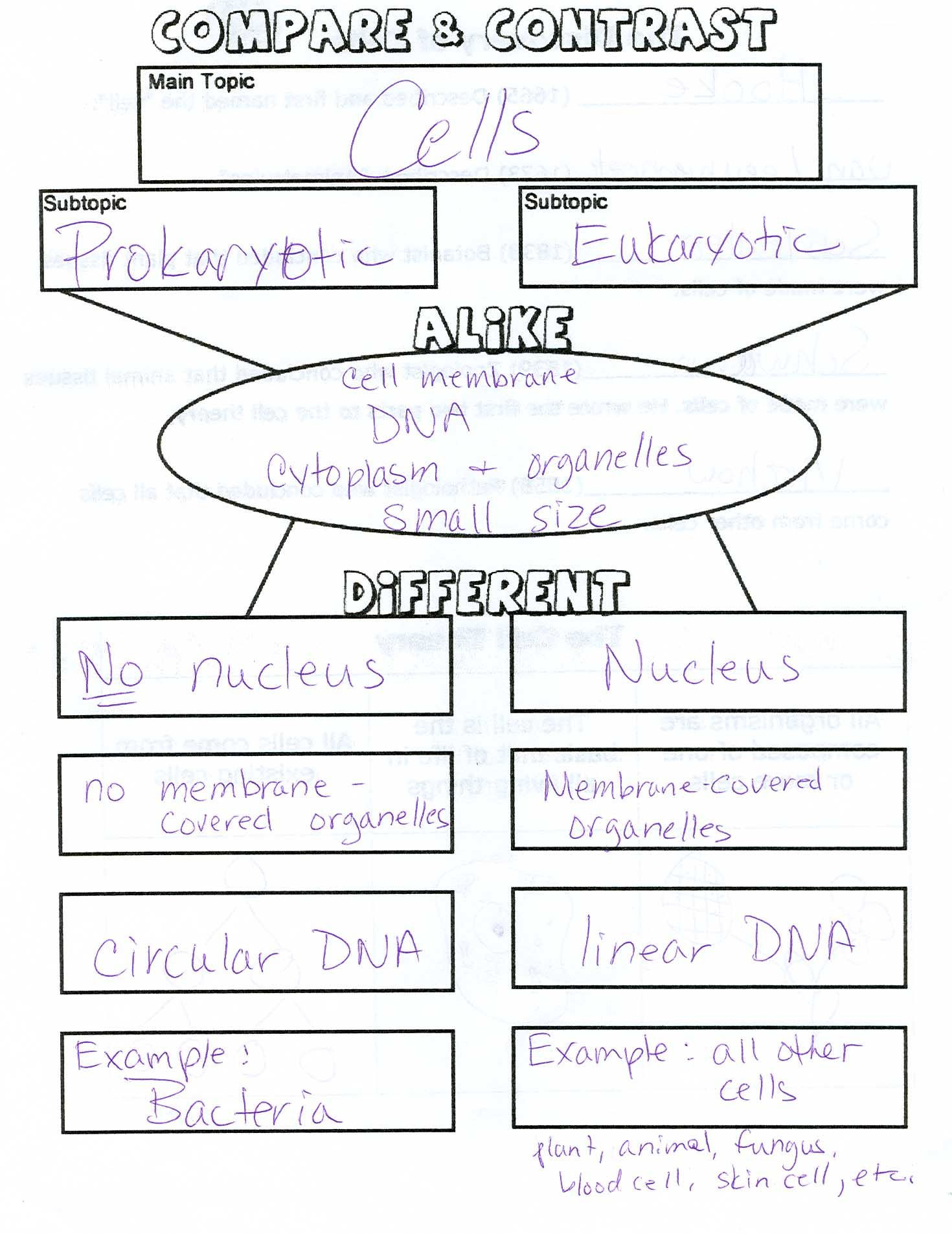 Cell organelles Worksheet Middle School Classification Of Living Things 6th Grade Google Search