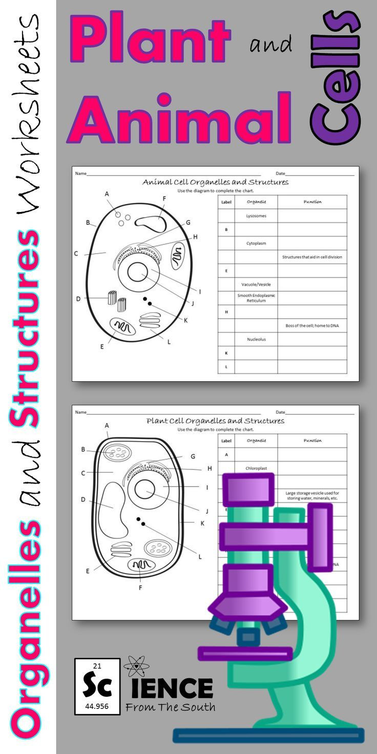 Cell organelles Worksheet Middle School Plant and Animal Cell organelles and Structures Worksheets