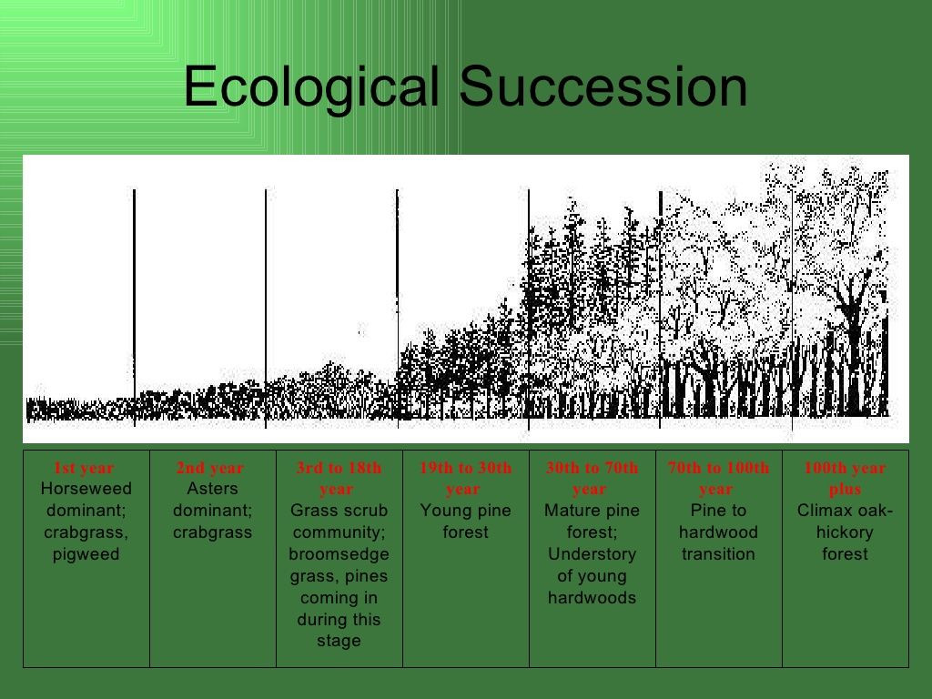 Ecological Succession Worksheet High School Ecological Succession