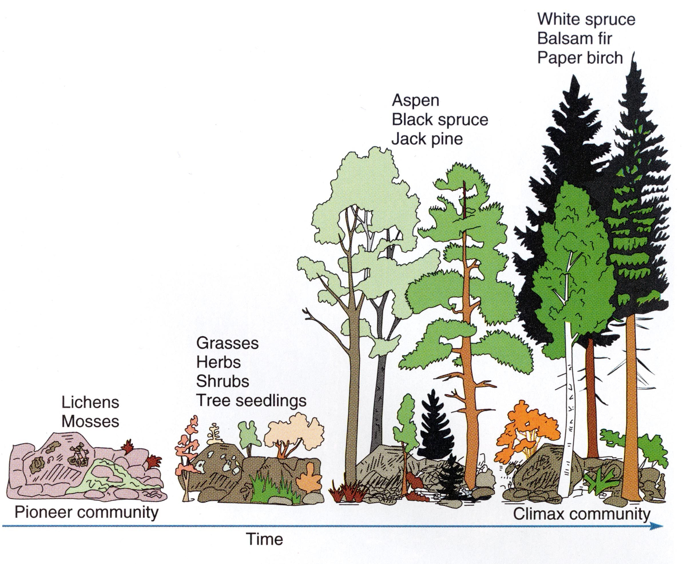 Ecological Succession Worksheet High School Ecological Succession Teks 7 10 C Diagram Does Use Out
