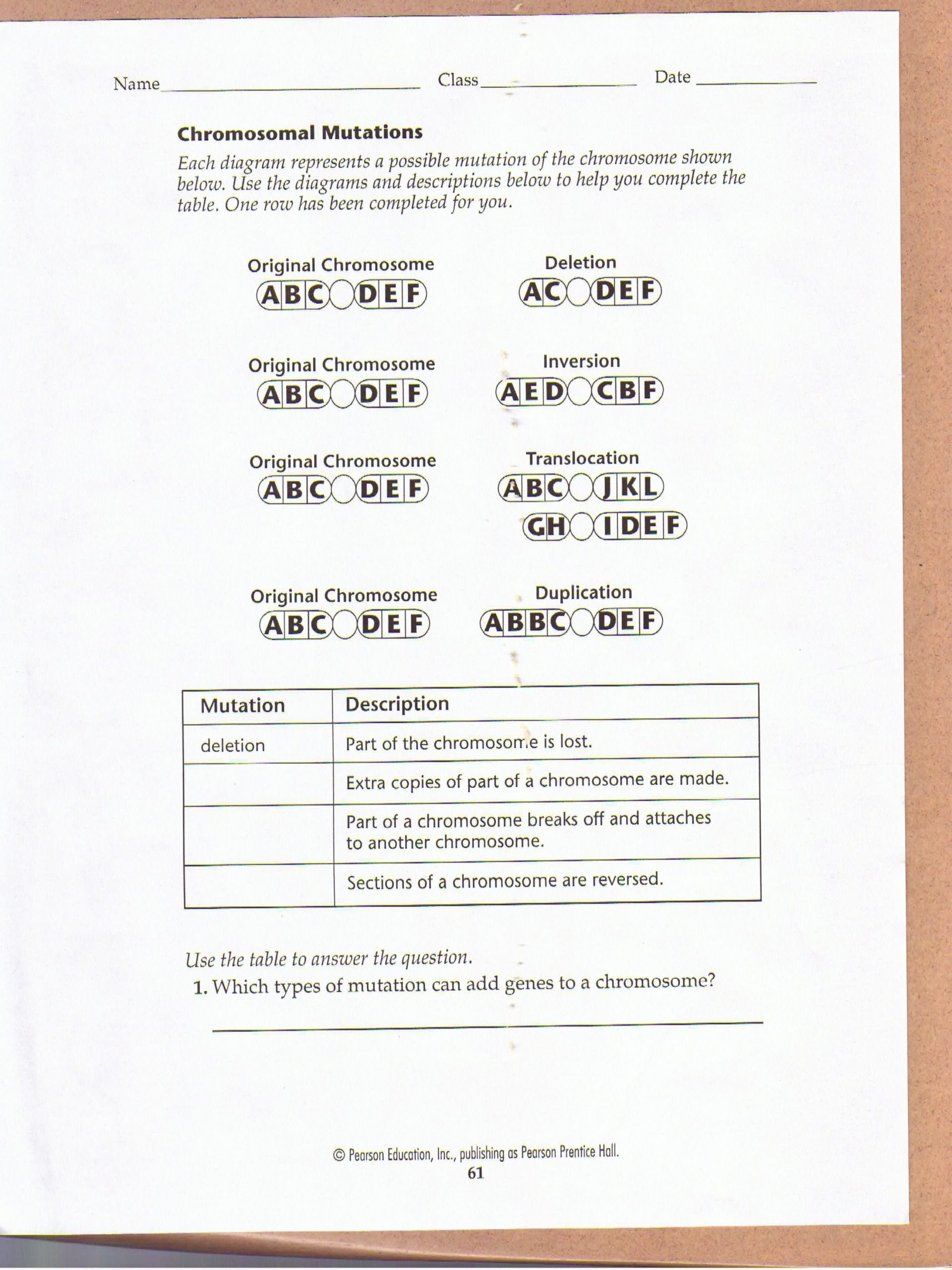 Mutations Worksheet Middle School Chromosomal Mutations Worksheet