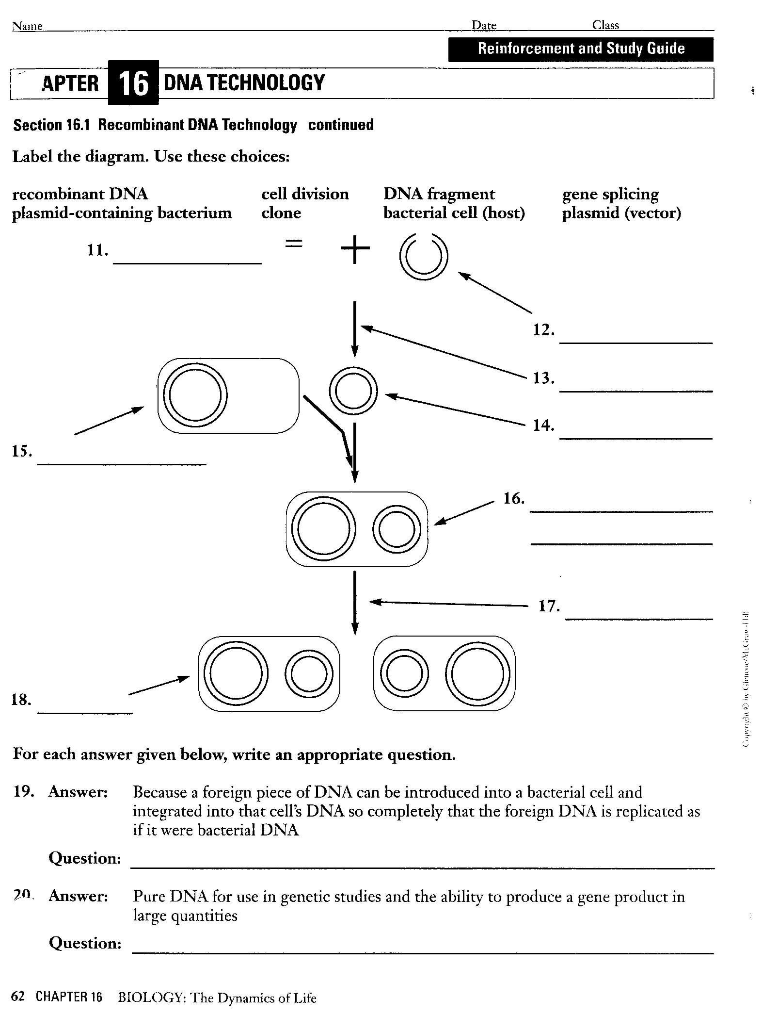 Selective Breeding Worksheet Middle School Restriction Enzyme Worksheet Results for Yahoo Image