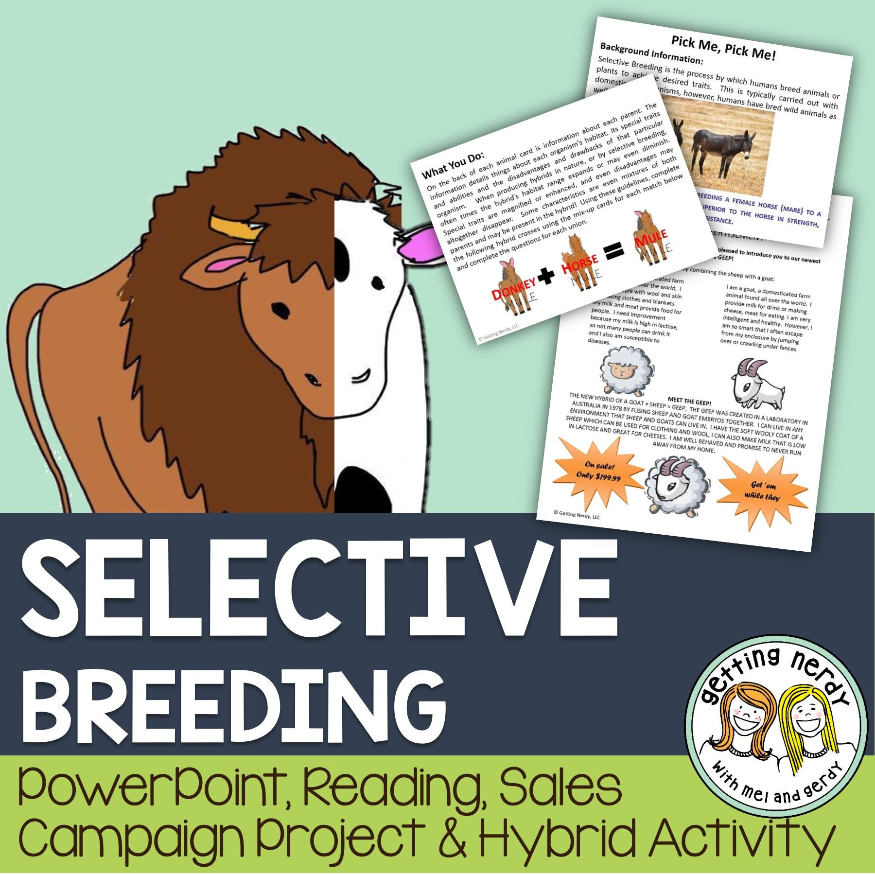 Selective Breeding Worksheet Middle School Selective Breeding and Hybridization Powerpoint and