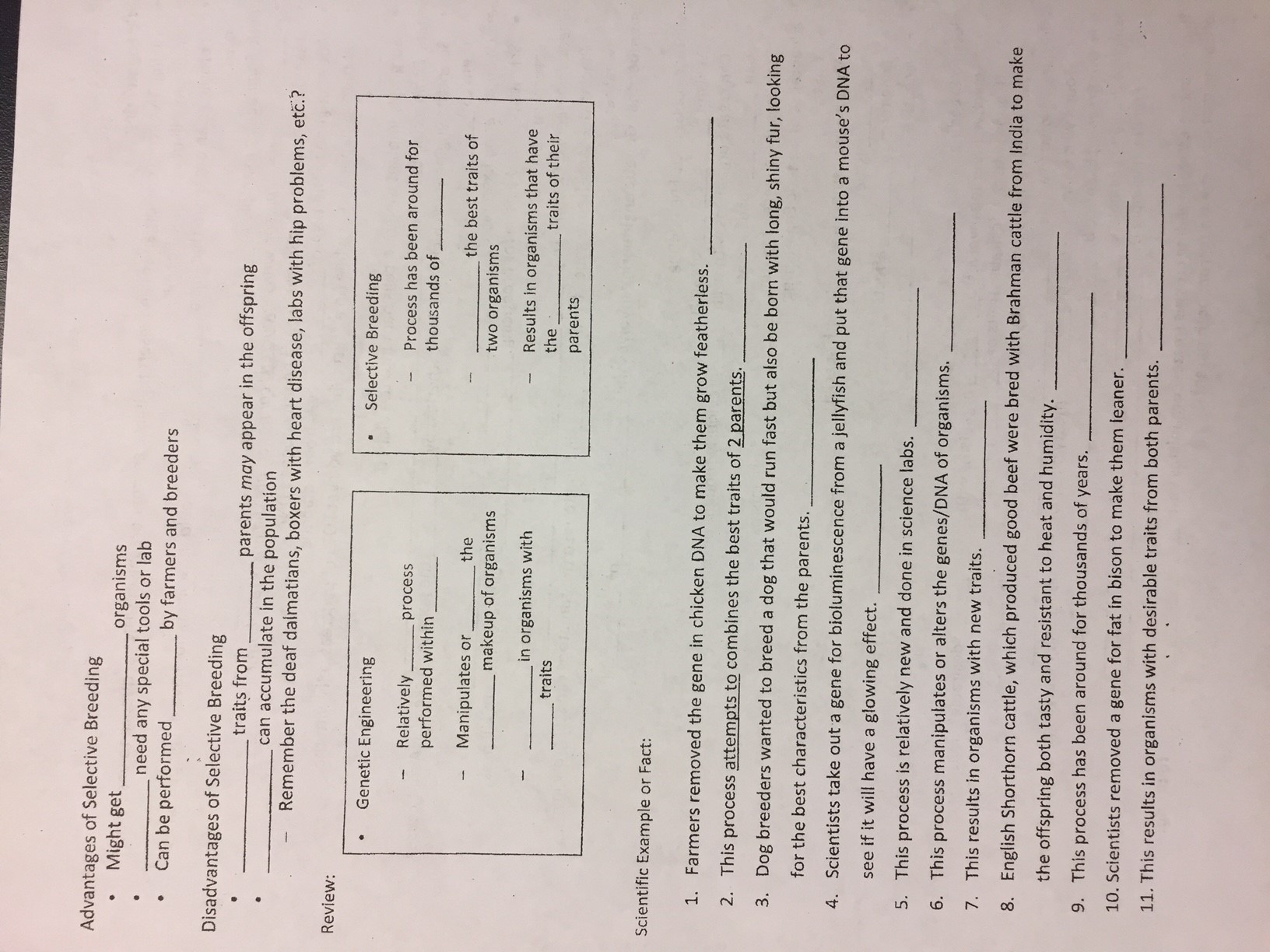 Selective Breeding Worksheet Middle School Selective Breeding Notes 2