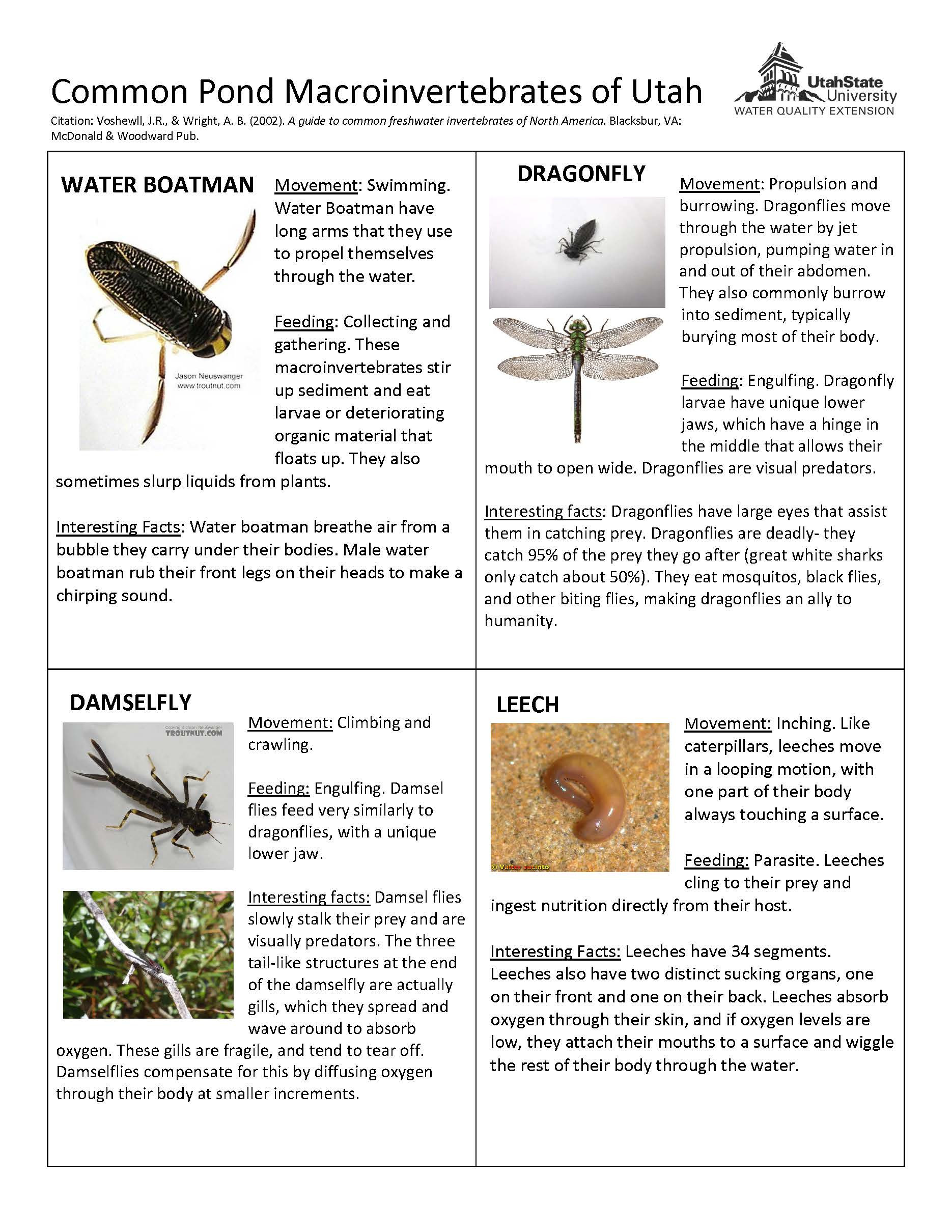 Water Quality Worksheet Middle School Aquatic Macroinvertebrate Lesson Plans